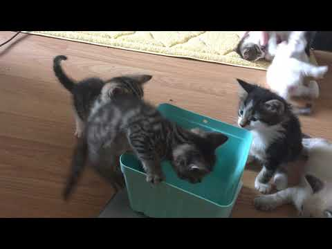 Getting Prepared for the Hurricane with Cats and Foster Kittens!