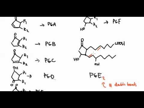Lipids 15:  Prostaglandins Part 2