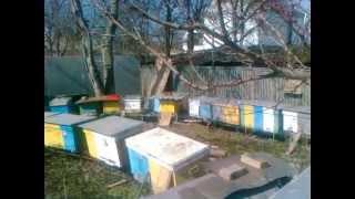 Пасіка і бджоли
