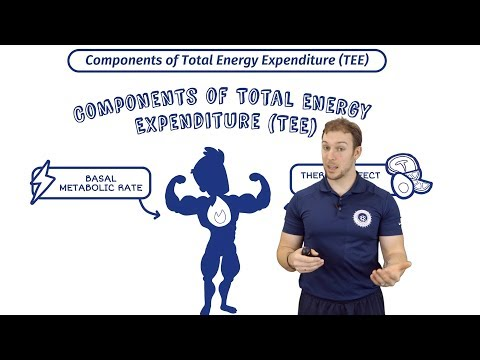 Total Energy Expenditure | Calories In Vs Out | BMR & Thermic Effect Of Food