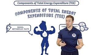 Total Energy Expenditure   Calories In Vs Out   BMR & Thermic Effect Of Food