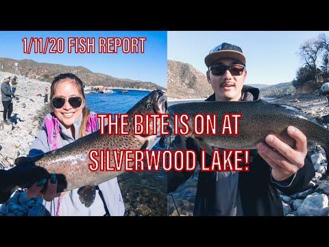 SILVERWOOD LAKE FISH REPORT! WIDE OPEN BITE!