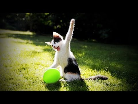 Cats and Dogs Vs. Balloons 🐱🐶 Funny Cats and Dogs Playing Balloons [Funny Pets]