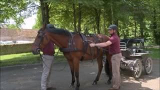 Attelage - Atteler son cheval - 1 - Mise à la voiture