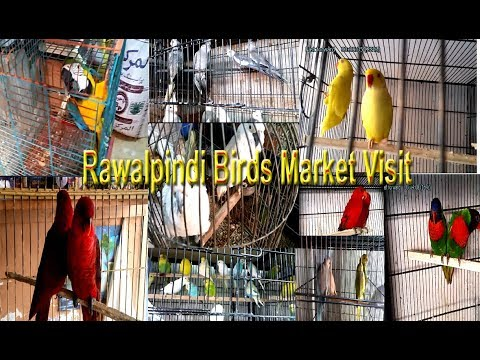 Rawalpindi Birds Market Visit Vlog#3 | Beautiful and Exotic Birds | Talking Parrots
