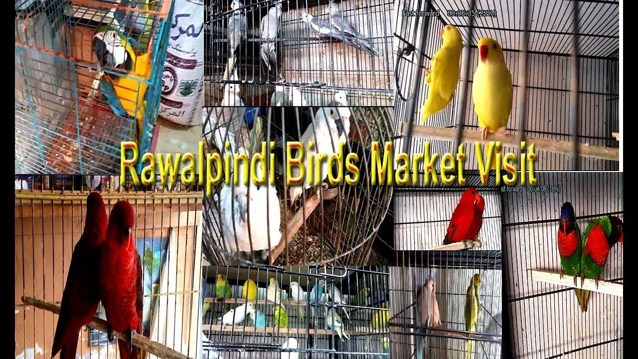 Rawalpindi Birds Market Visit Vlog#3 | Beautiful and Exotic Birds | Talking  Parrots