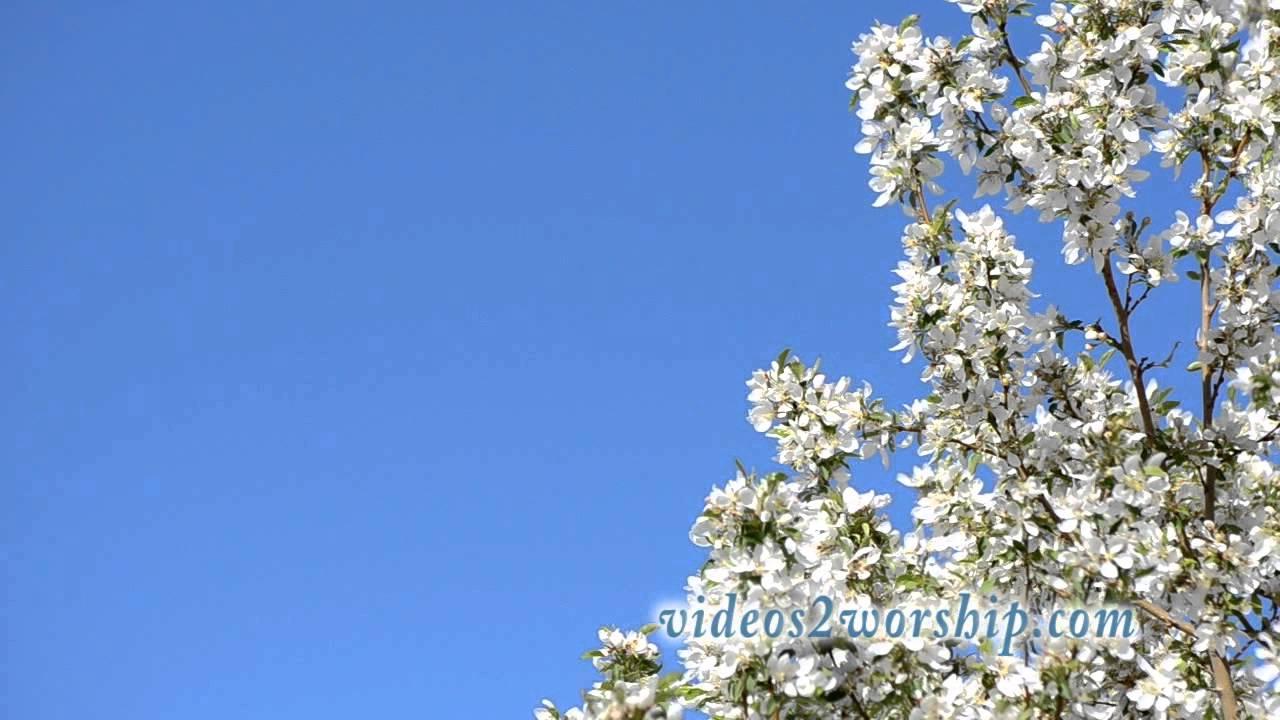 Spring worship moving background loop youtube - Backgrounds springtime ...