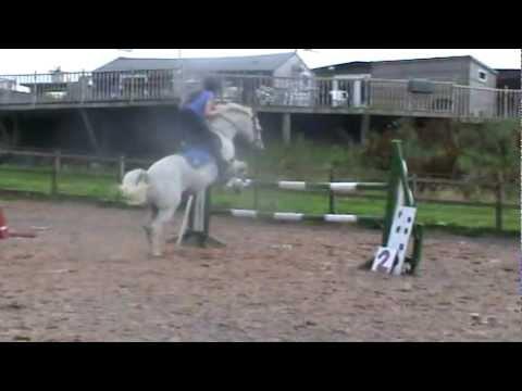 13.1 Top Pony Club Pony for sale