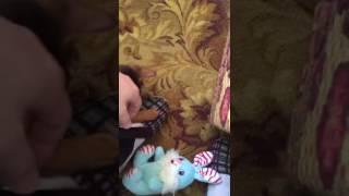 Питомник абиссинских кошек WildAby