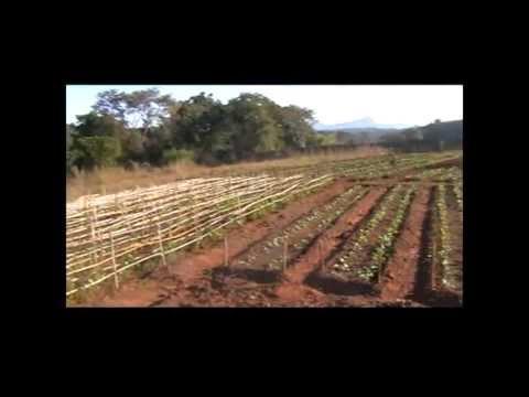 Mozambique Farm For Sale