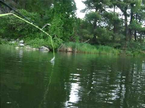 Fly Fishing for Bass with Poppers - YouTube