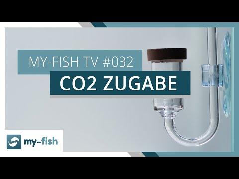 Wie kommt das CO2 ins Aquarium? | my-fish TV