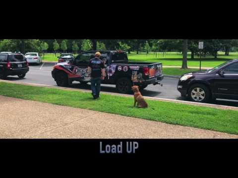 Lab, Rusty!  Amazing Off Leash Dog Training | Best Electronic Collar Training