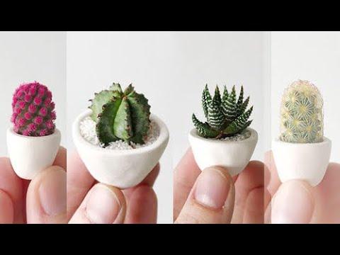 ?? Xương rồng & Sen đá đẹp độc lạ ở Mỹ 2020- cách trồng & chăm sóc dành cho bạn yêu cây cảnh ^__^