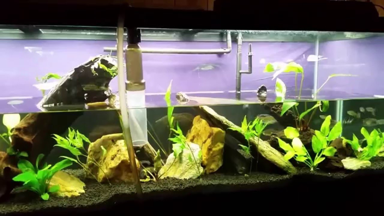 Fish tank quick cycle - Instant Tank Cycling Does It Work