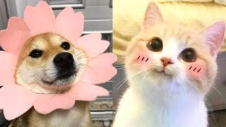 CUTE ANIMAL COMPILATION | Pets that Will Make Your Day 100% Better 🥰