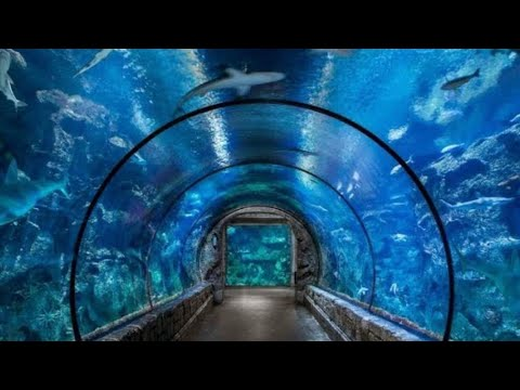 LAS VEGAS Shark Reef Aquarium Mandalay Bay MGM Resorts Cinematic Walk Through Fish Baby Sting Rays