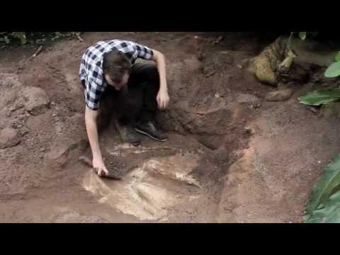 Dinosaur footprints found in Eden Project rainforest