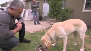 Linguagem Corporal - O Encantador de Cães sendo mordido