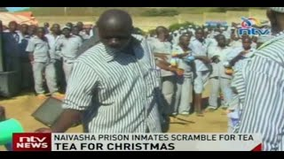 Tea for Christmas: Naivasha prison inmates scramble for tea