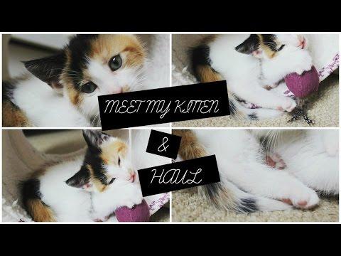Meet My Kitten & Haul | Alex Armstrong