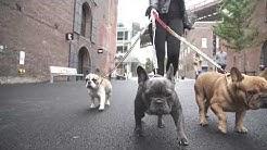 Big Dog Chains Luxury Dog Collars & Leashes