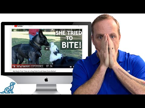 We Need To Talk About A Controversial Dog Training Video