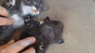 Кошка по имени Тигра с потомством