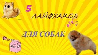 5 ЛАЙФХАКОВ ДЛЯ СОБАК
