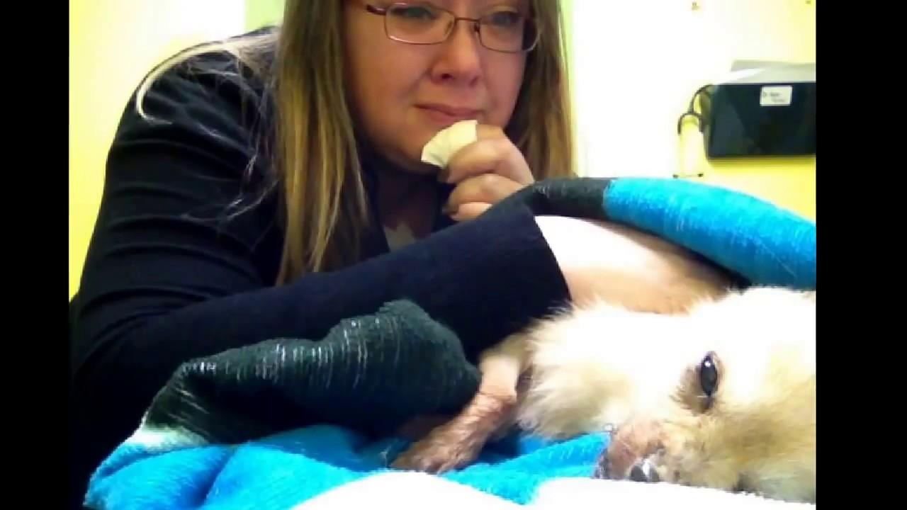 Euthanasia, saying goodbye to my dog  WARNING Sad