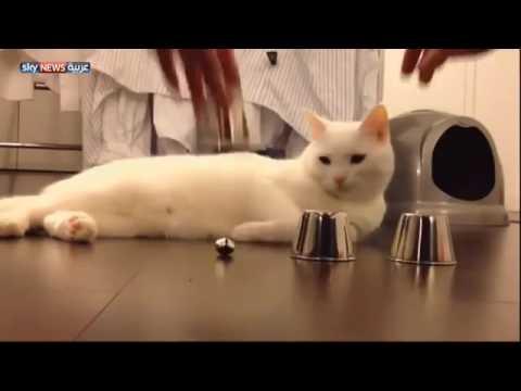 beatifull cat