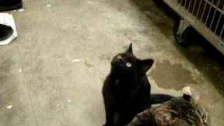 Rose Hope Animal- Cats - Black Cat
