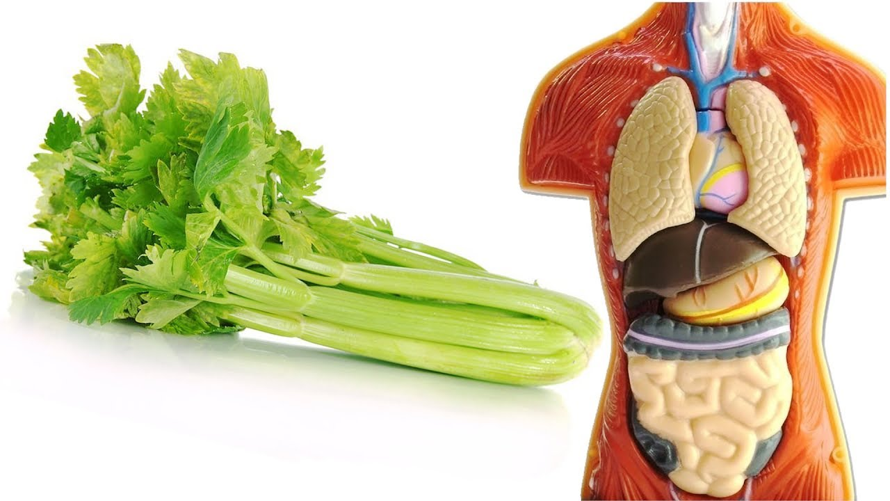 Sexual health benefits of celery stalk