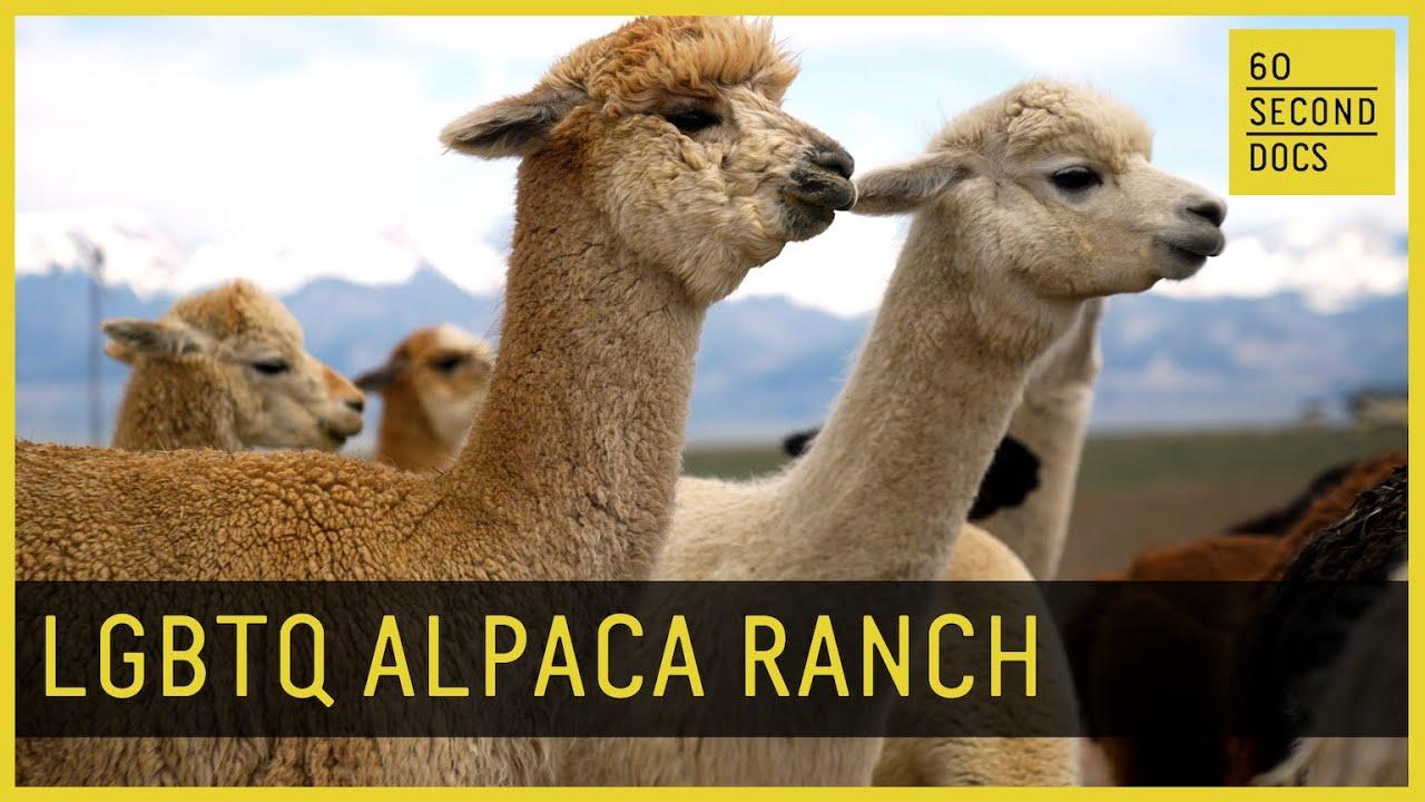 Off the Grid at an LGBTQ Alpaca Ranch