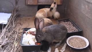 Разведение кроликов в ямах(Довольно интересный метод разведения кроликов., 2014-05-13T18:20:34.000Z)