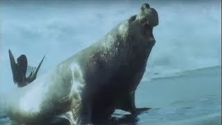 Elephant Seals - Life in the Freezer - BBC thumbnail