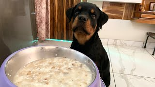 Home-made Food for Dogs with 100% Result | All Day Meals
