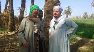 صعيدي بيدور علي اثار تحت النخله والشيخ نصب عليه هتموت من الضحك