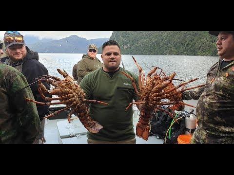 Fiordlands Saga 2 - Fishing & Diving For Huge Seafood