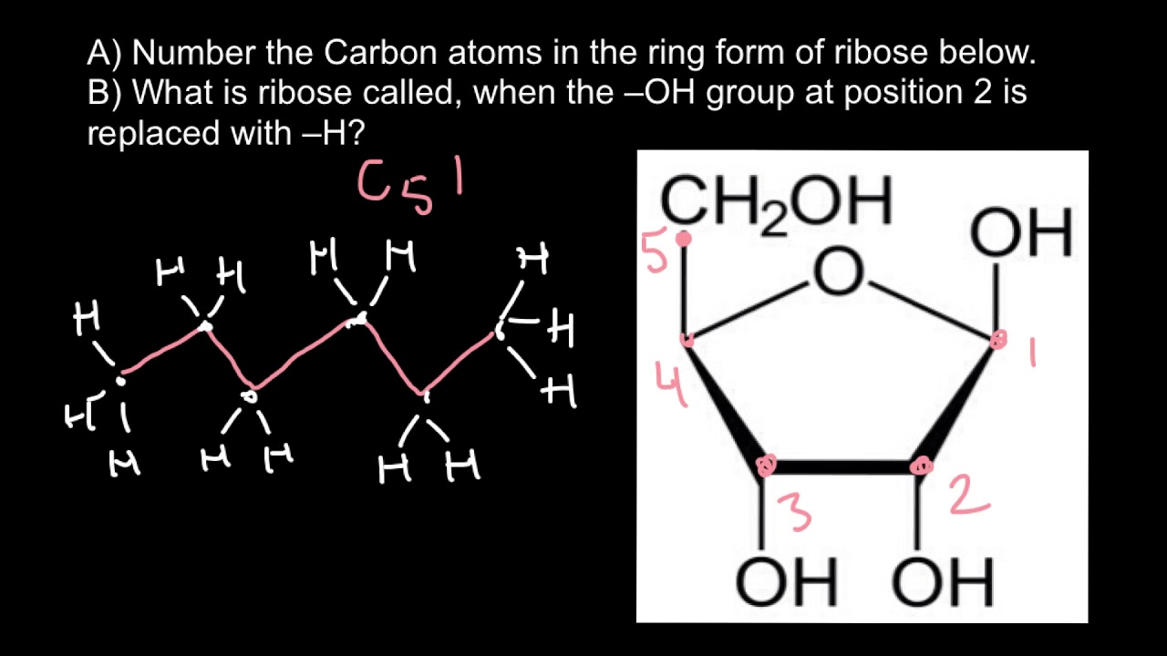 how to number carbon atoms youtube