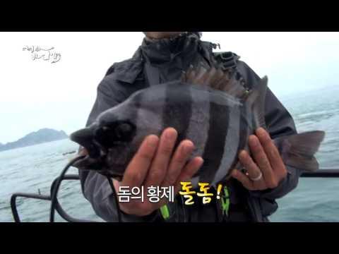 [어영차 바다야] 돔의 황제,낚시의 지존, 돌돔
