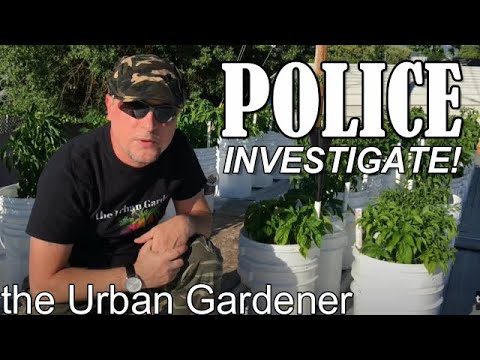 Episode 27 - Police Investigate My Peppers!  Growing Peppers 2017 Part 4