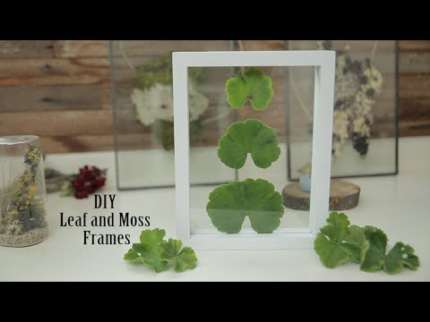 DIY Leaf and Moss Frames - YouTube