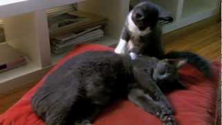A demonstration on the art of cat massage by F. Scott & Anton to be...
