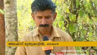 Idukki pepper withers under drought
