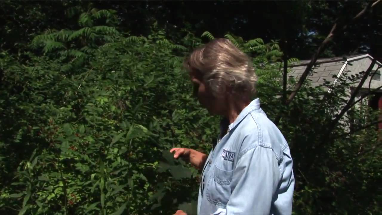 How to Get Rid of Invasive Plants