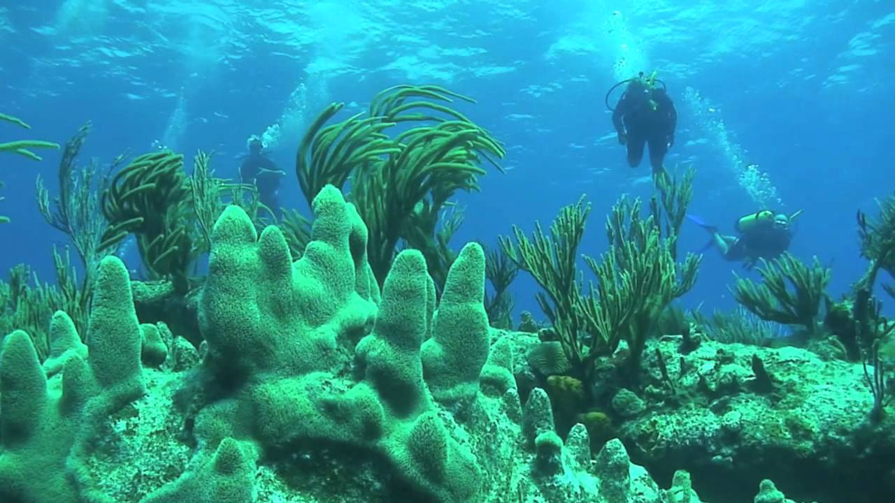 scuba diving in st maarten st martin dive lobster hotel youtube. Black Bedroom Furniture Sets. Home Design Ideas