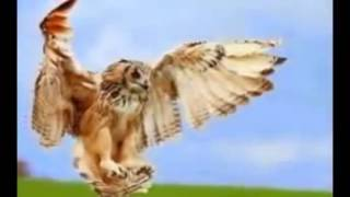 animals and birds hd wallpaper youtube original