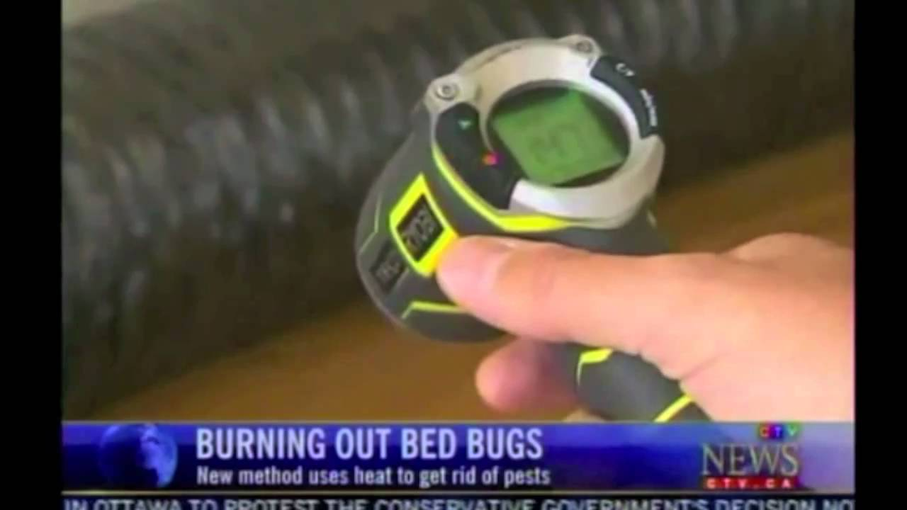 how 2 get rid of roaches how to get rid of fruit flies in the office bed bugs removal heat. Black Bedroom Furniture Sets. Home Design Ideas