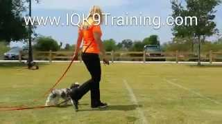 Iq K9 Training | Oceanside Obedience Dog Training With 'bubba'